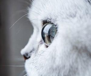 adorable, animal, and beauty image