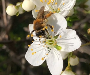 bee, insects, and nectar image