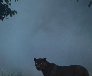 aesthetic, big cat, and panter image