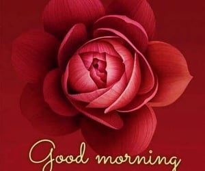 flower, good, and morning image