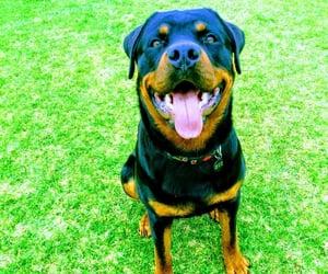 boy, dog, and photography image