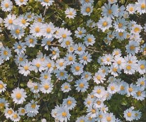 flowers, wallpaper, and lockscreen image