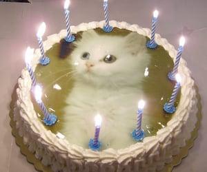 cat, cake, and kitten image