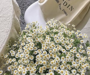 flowers, aesthetic, and daisy image