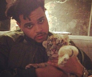 tiger, the weeknd, and cute image