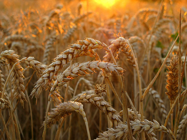 agriculture, bread, and close-up image