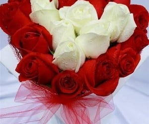 flower, flowers, and red flower image