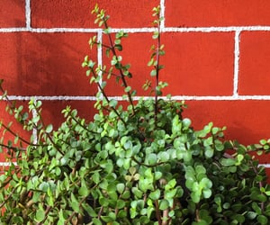 green, red wall, and green leaves image