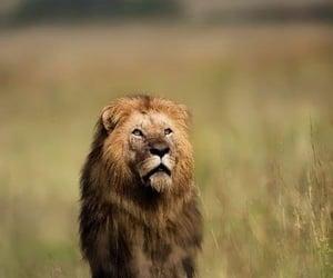 Lion's empire