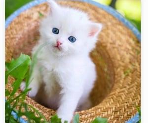 kitten, spring, and white cat image