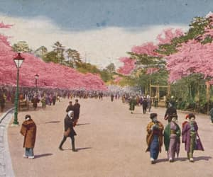 1920s, cherry blossoms, and history image