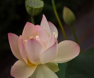 flower, nature, and pretty image