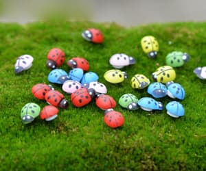 etsy, scrapbooking, and ladybirds image