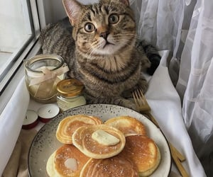cat, pancakes, and food image
