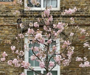 april, cherry blossom, and cherry blossoms image