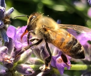 bee, insects, and flowers image