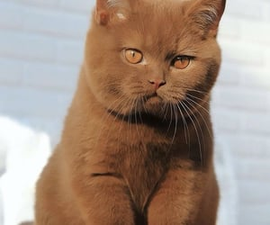 brown, cat, and eyes image