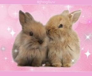 archive, bunnies, and kawaii image