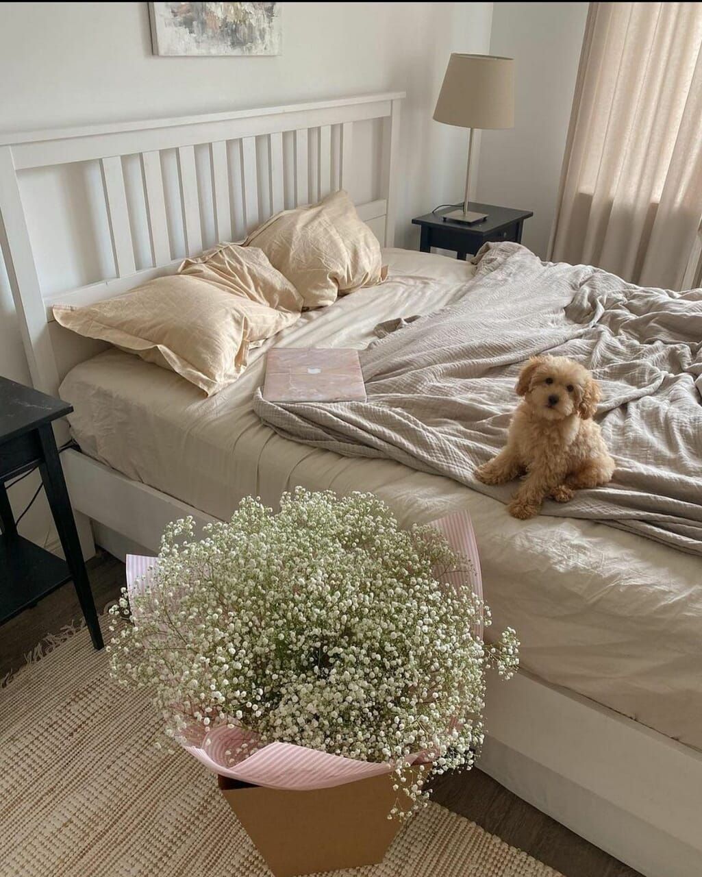 bed, bedroom, and dog image
