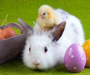 easter, animal, and bunny image