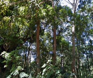 forest, lush, and tropical image