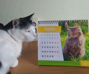 adorable, gato, and Gatos image