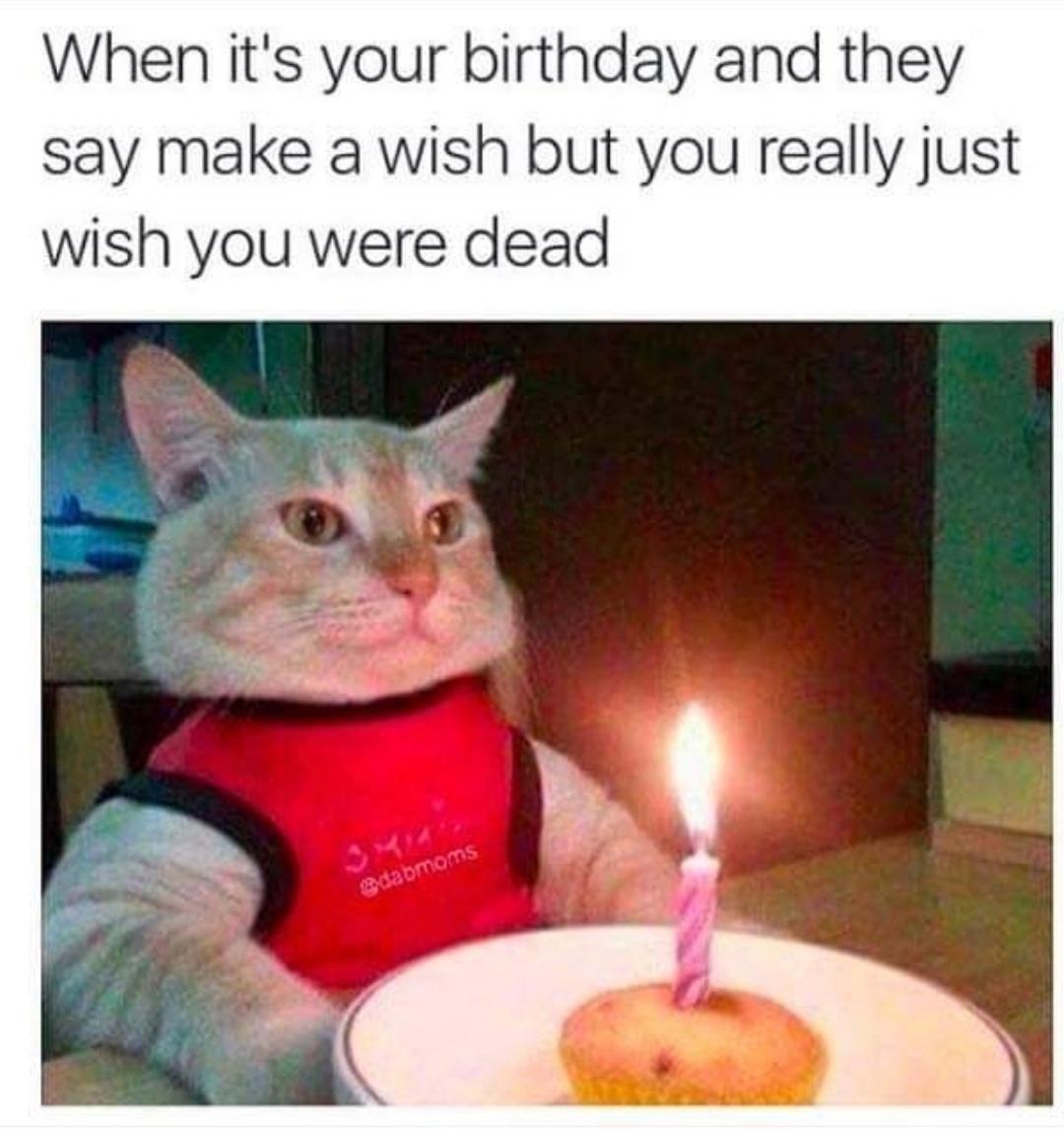 birthday, funny, and humor image