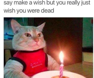 birthday, funny, and humor image