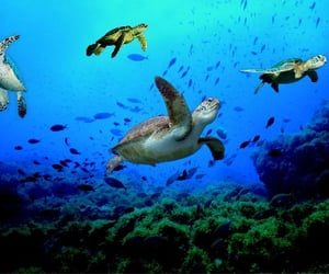 Animales, animals, and turtles image