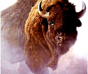 bison, buffalo, and chief image