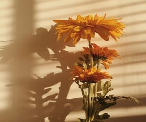aesthetic, sunflower, and aesthetic flowers image