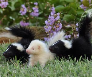 skunk, cute, and animals image