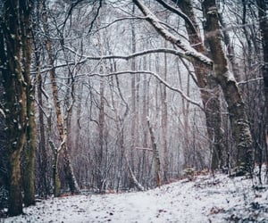 winter, nature, and path image