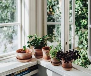 nature, plants, and pots image