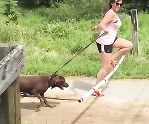 dog, sport, and epic fails image
