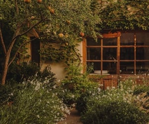 backyard, fruit, and garden image