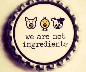 vegetarian, vegan, and animal image