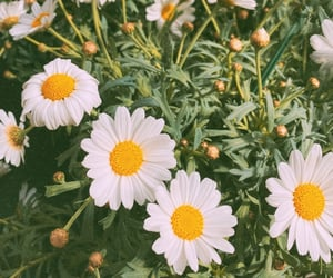 aesthetic, daisy, and garden image