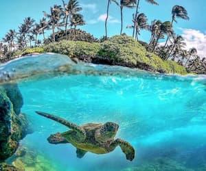 underwater, bali, and hawaii image