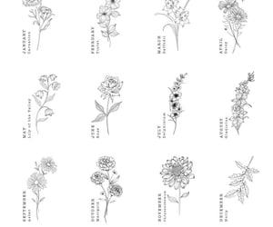 flower, minimalistic, and inspiration image