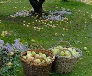cottagecore, apple, and fruit image