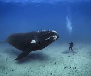 Discovery Channel, filmmaking, and national geographic image