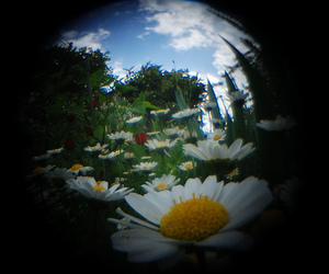 daisy, fisheye, and vintage image