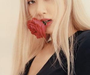 rose and blackpink image