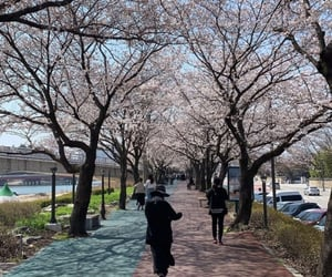 korea, spring time, and sakura image