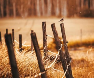arboles, campo, and naturaleza image