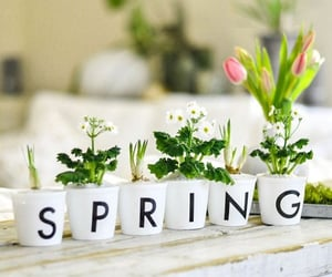 flowers, hello spring, and spring image