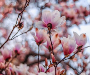 aesthetic, bloom, and floral image