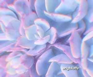 aesthetic, soft, and sweetener image