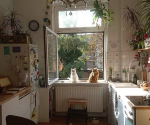 cat, kitchen, and aesthetic image